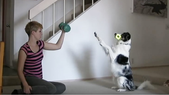 Dog tricks in the form of aerobics